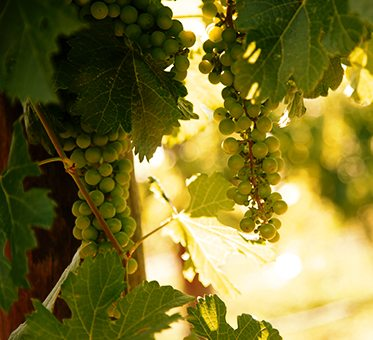 The Wineries Colorado Wine
