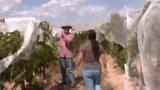 Dr. Horst Caspari explains grapevine training systems, part 2